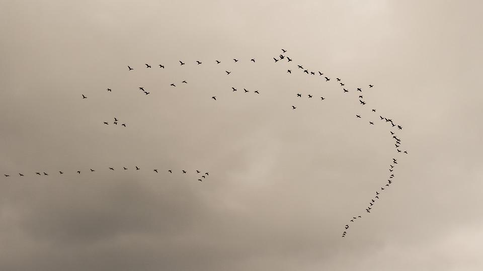 swarm-2135779_960_720.jpg