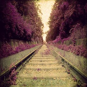 보라철도.jpg